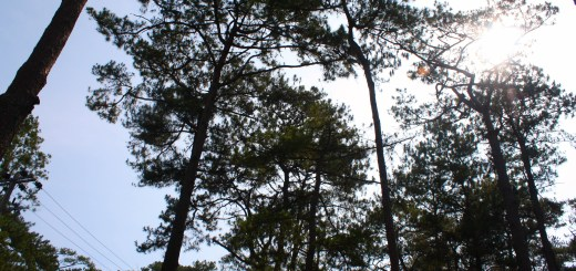 Save the Trees Baguio