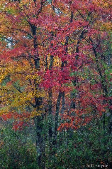 Henniker Color Scott Snyder Photography
