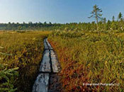 The Philbrick-Cricenti Bog Trail