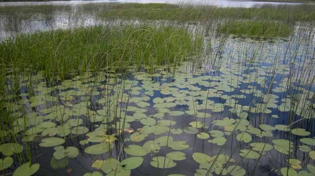 Shallow Marsh