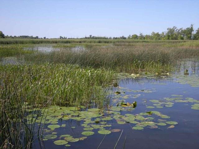 Lake Winneconne - Clark's Bay