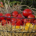You can pick your own fruits and vegetables locally.