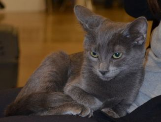 This sweet smoky kitten really needs a family to love!