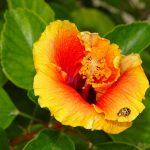 Sweet Nectar and Ladybugs