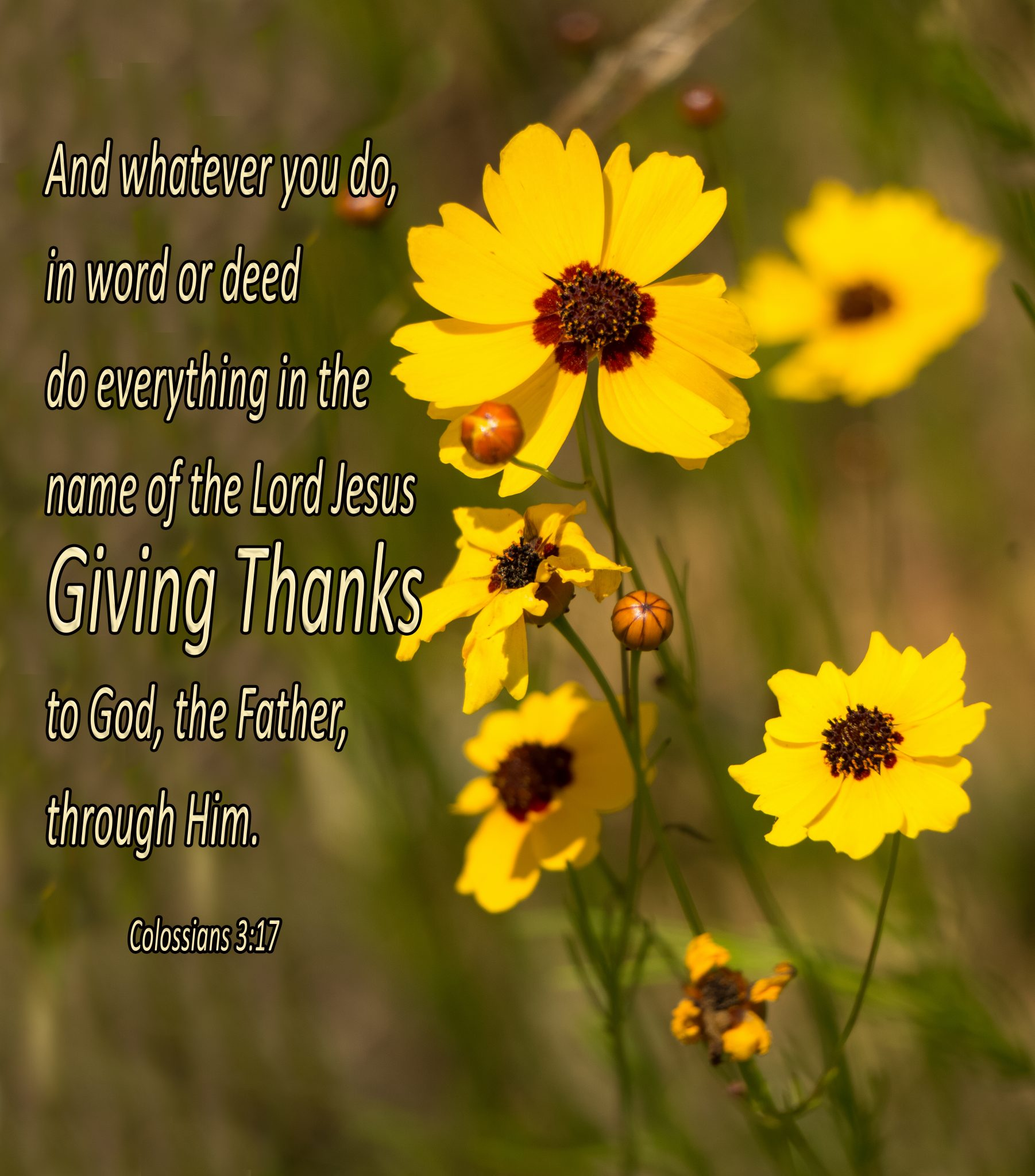 """1 Thessalonians 5:18 – """"Give thanks in all circumstances; for this is the will of God in Christ Jesus for you."""""""