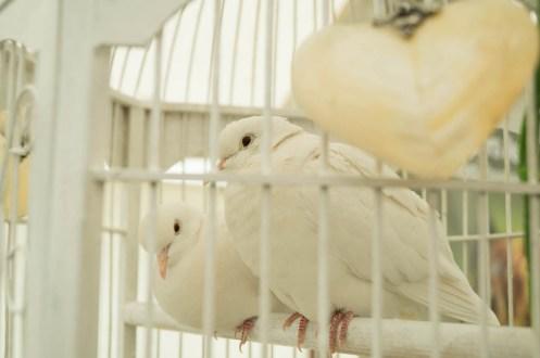 Lakeland Doves