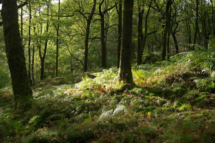 Dense woodland