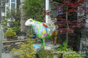 A Go Herdwick ewe outside Lingmoor Guest House in Windermere