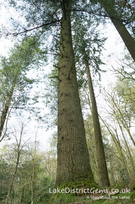Tree in Skelghll Wood
