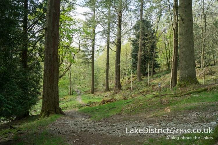 Skelghyll Wood