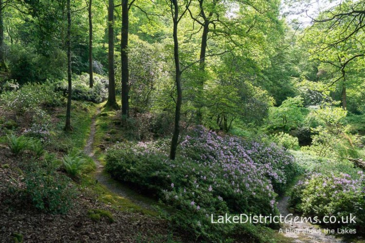 Azaleas and paths at Stagshaw Gardens, Ambleside