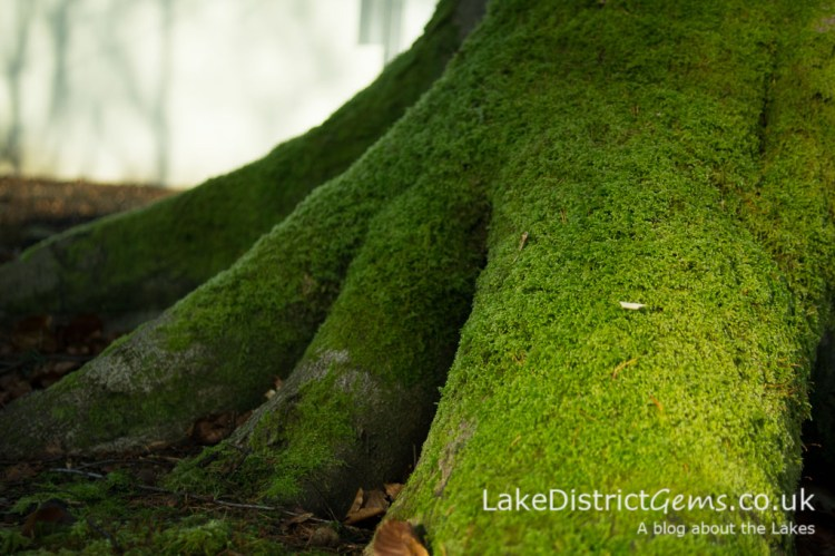 Macro image of moss on a tree