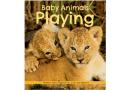Baby Animals Playing