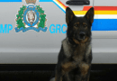 Cold Lake RCMP's force was justified says ASIRT after suspect fled scene in 2018 and suffered major injuries