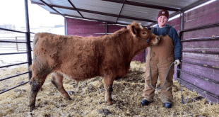 Upcoming calf tour for Clandonald 4-H Multi Club