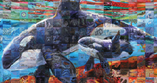 Vegreville to be Represented in the Canada Connects Mosaic Mural