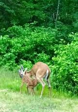 Stanek wildlife