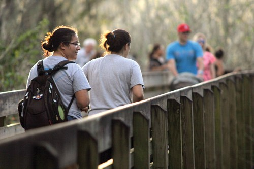 Isabel Magnano, left, and Felisha Dicks, both of Tampa, stroll out along the Lettuce Lake Park boardwalk, while others walk in. The boardwalk winds through the hardwood swamp forest where visitors can see vegetation and wildlife that are indigenous to this area.