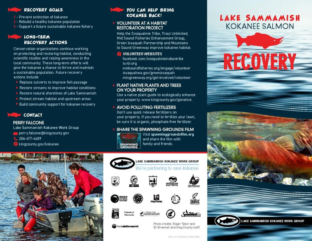 Lake Sammamish Kokanee The Little Red Fish