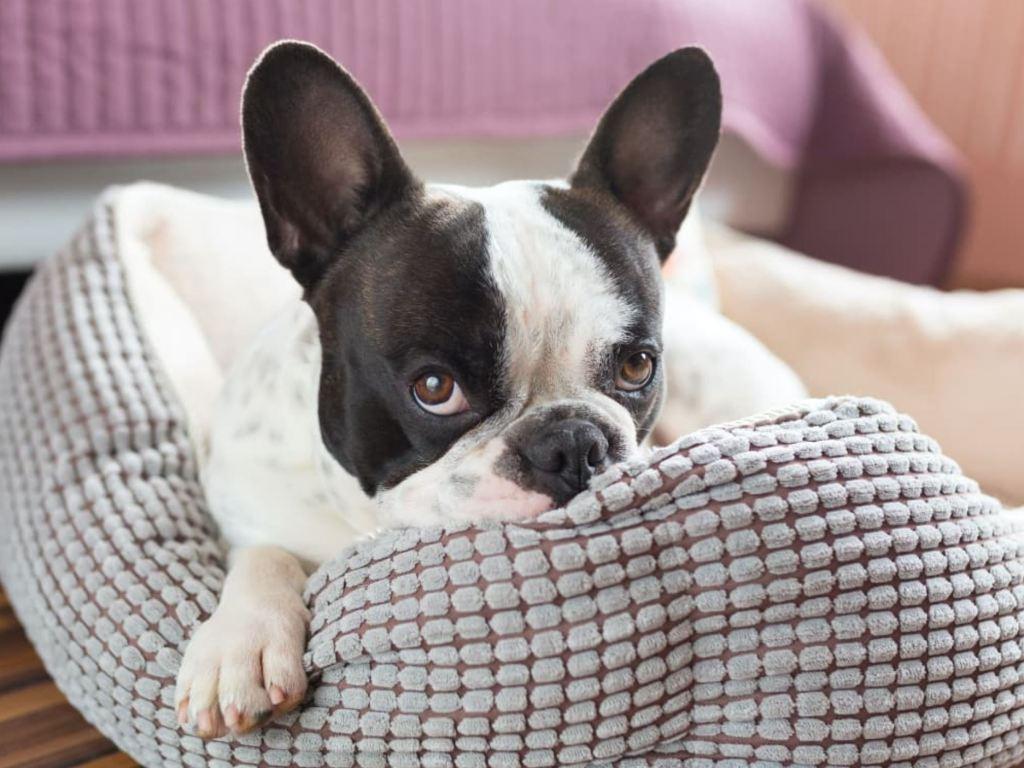 calming dog beds