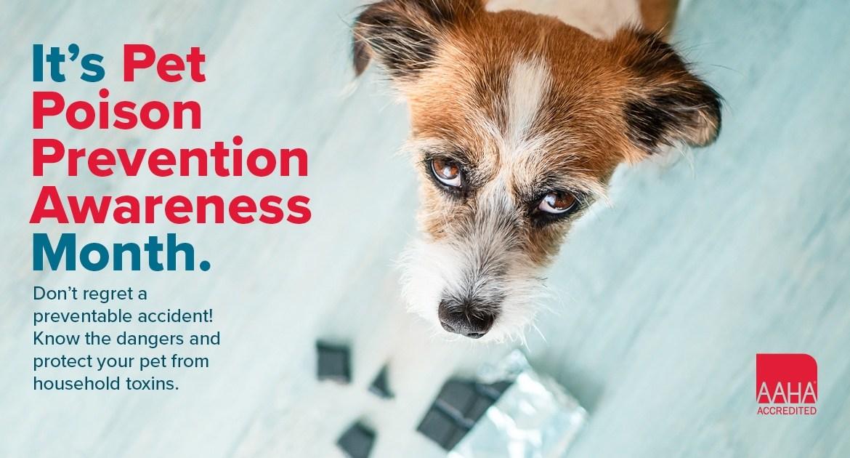 Pet Poison Prevention Awareness