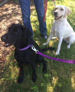 Two of our service dogs, Mint and Garnet