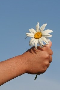 a photo of a daisy