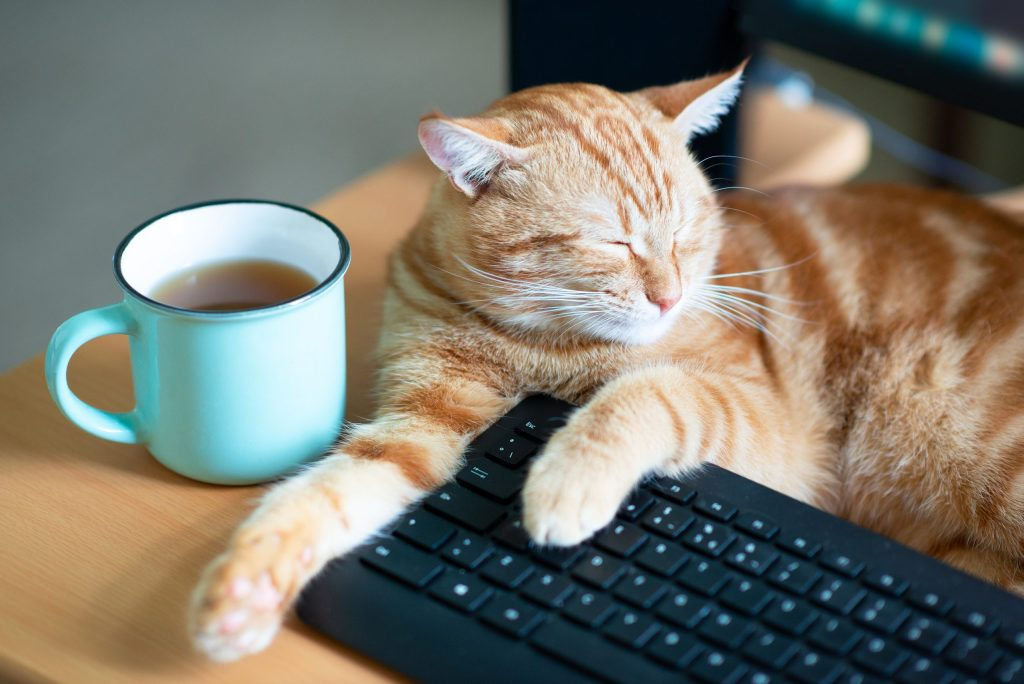 cat sleeps at home working place near keypad and cup of tea. Stay home, work home, quarantine