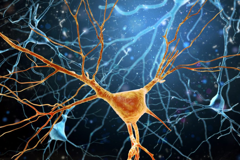 3D Illustration of Human Brain Neurons structure. A high resolution.