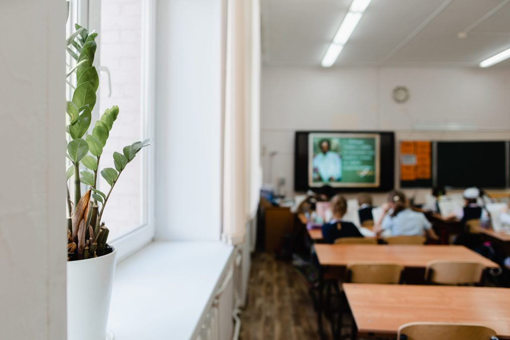 Indoor plant in a pot in the classroom in focus. Pupils sit back to the camera at the study tables in the classroom in the classroom blurred focus.