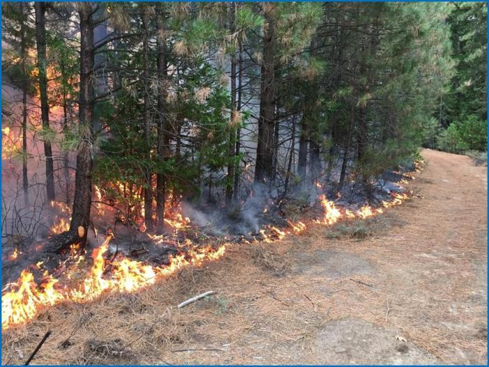 Prescribed Fires Provide Ecological Benefits to Forest Health