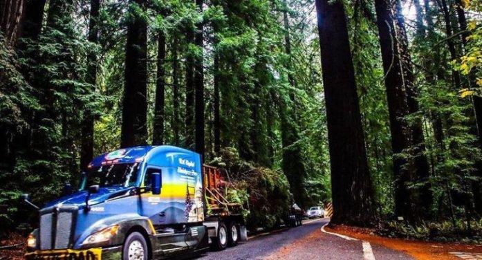 Follow the 2021 U.S. Capitol Christmas Tree from California to Washington DC