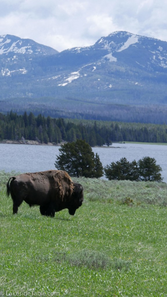 Bison and Mountains of Yellowstone National Park | www.lakesidetable.com