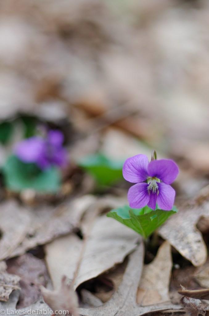 Violet flower in brown leaves