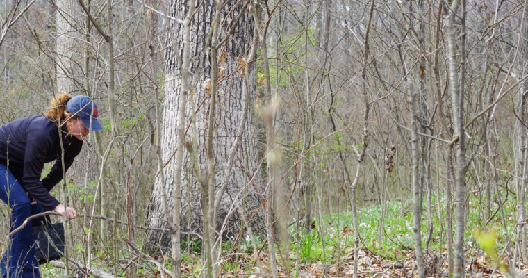 How to Find Morel Mushrooms in Illinois