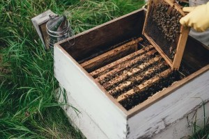 Bees_001