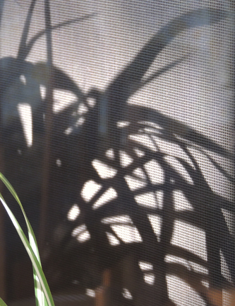 spider plant shadow against screen