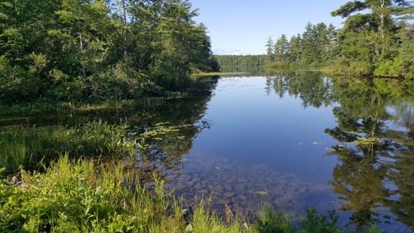 Hawkins Pond