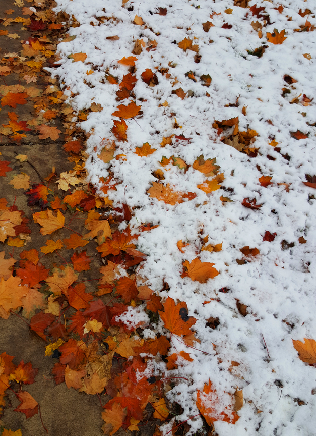 fall leaves with snow