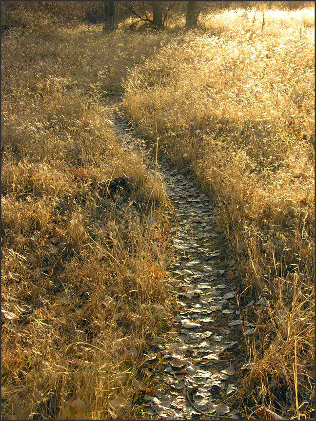 The road less traveled–recently