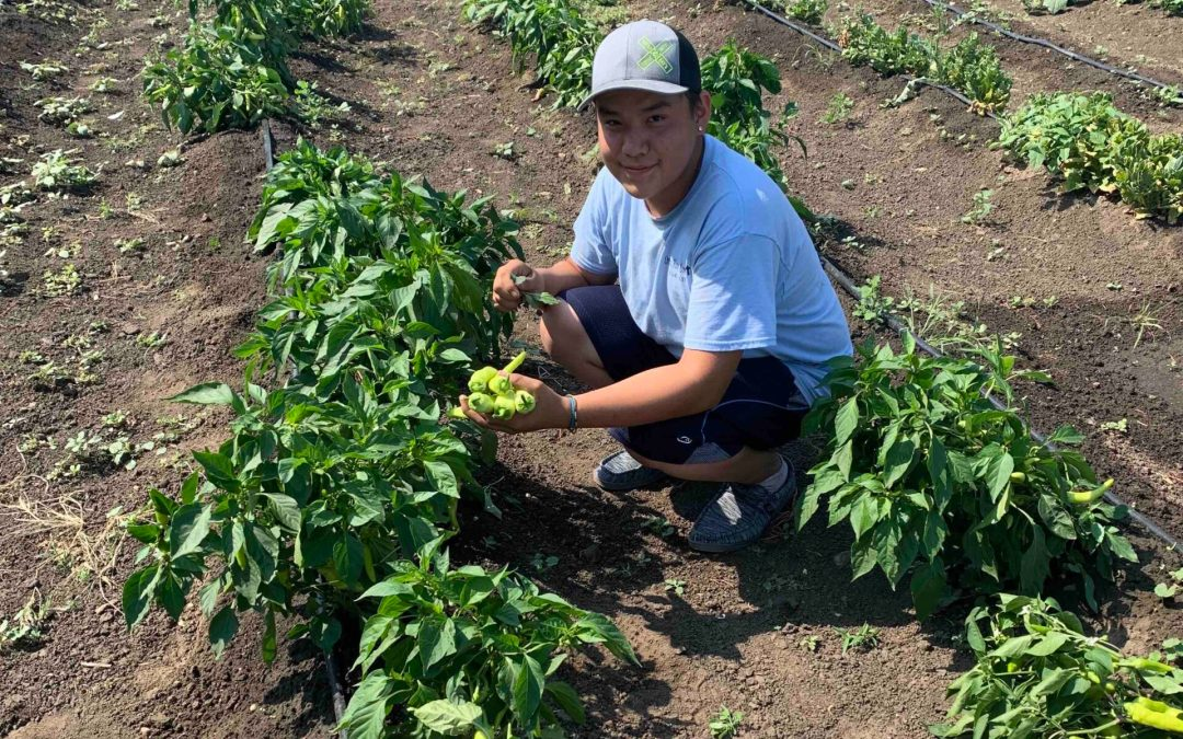 CRYP Celebrates 2021 Growing Season with Harvest Festival Dinner on Sept. 23