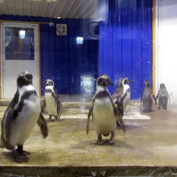 Зоопарк Кхао Кхео пингвин