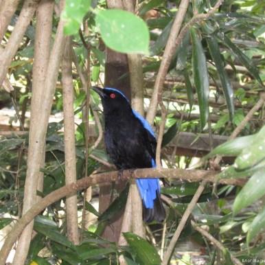 Зоопарк Кхао Кхео вольер с птицамиптицами