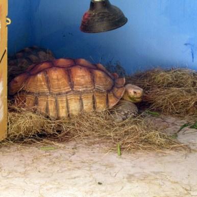 Зоопарк Кхао Кхео черепахи