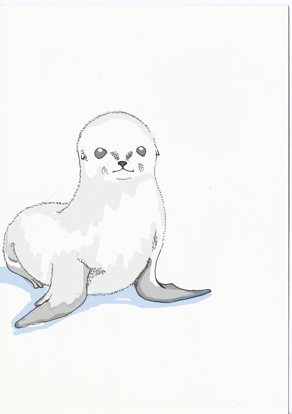baby seal coloring pages cooloring com