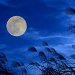 【中秋の名月】東京で2020年に見える方角と時間は?月出やピークの時刻もチェック
