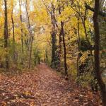 Los mejores lugares para fotografiar el otoño en Múnich