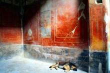 Perro en Pompeya