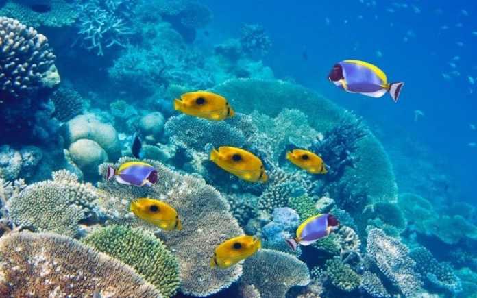 mauritius scuba