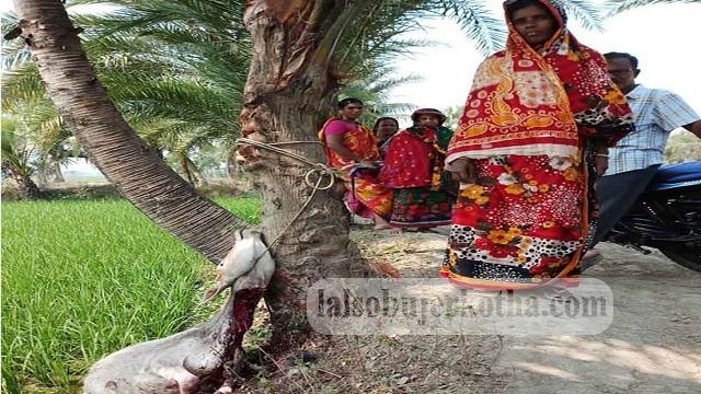 কেশবপুরে পূর্ব শত্রুতায় নৃসংসভাবে বলি হলো গরু